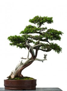 Bonsai & Supply Chain